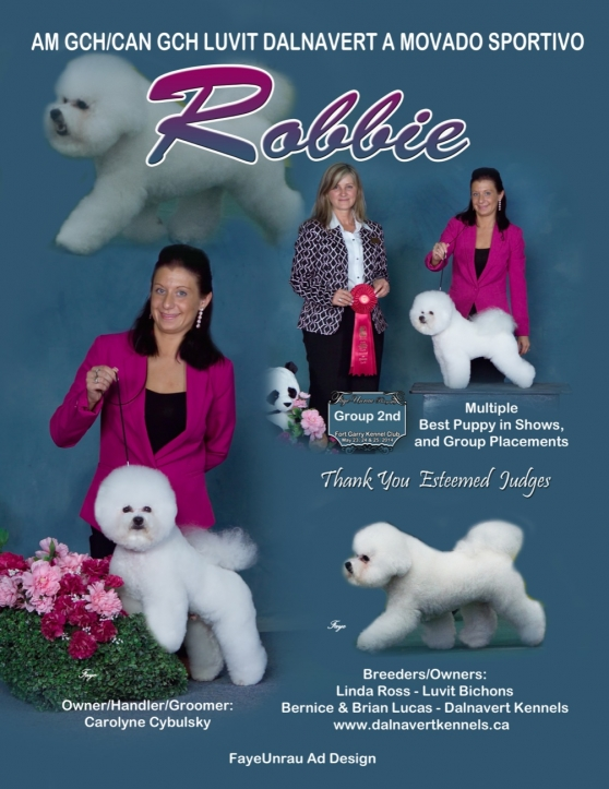 ROBBIES IS # 2 BICHON FRISE IN CANADA    | Dalnavert Kennels